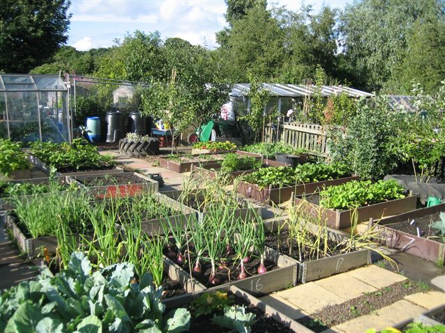 crewe town allotment federation
