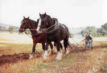 Ploughing at Westwell in the 1980s