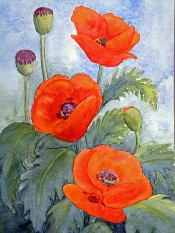 Karen Howard Poppies 2.jpg