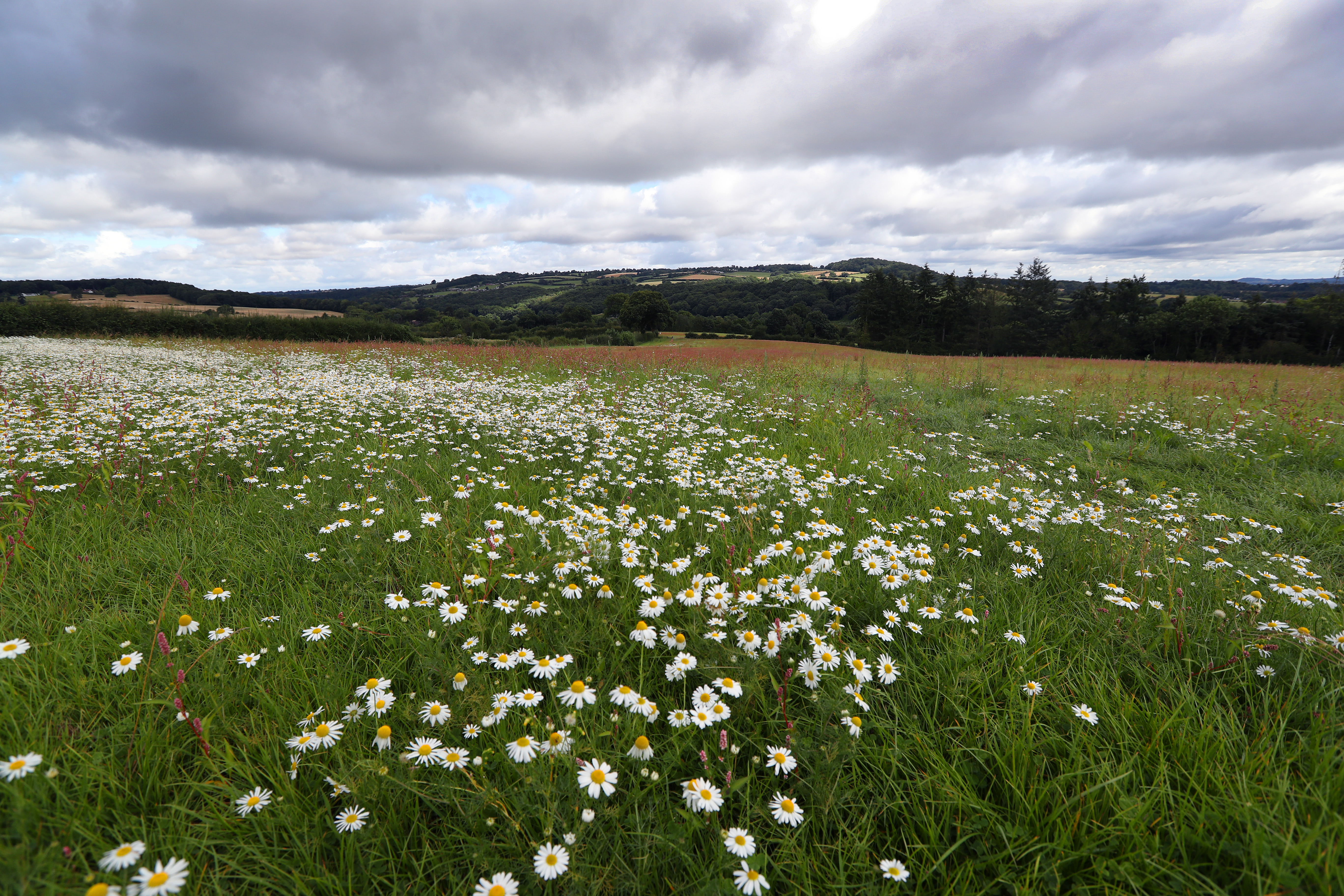 Image of wildflowers on the site