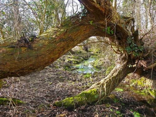 lg_AB_NEWT_fallen_tree.jpg