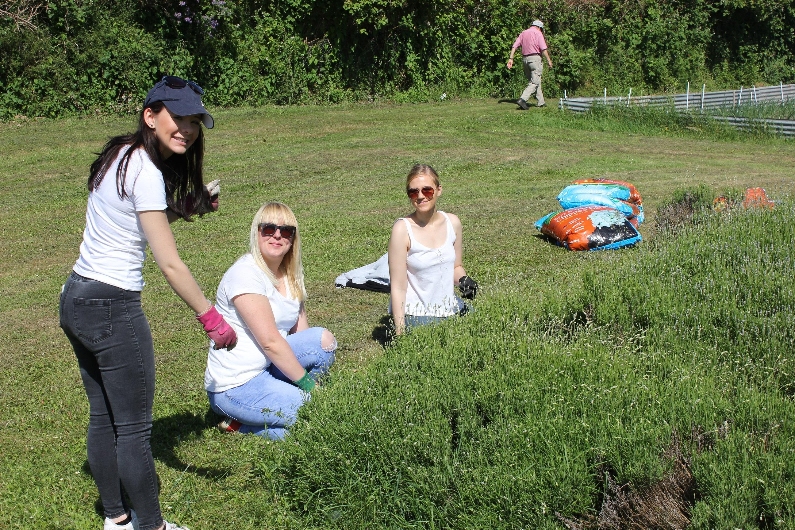 Volunteers from Allianz