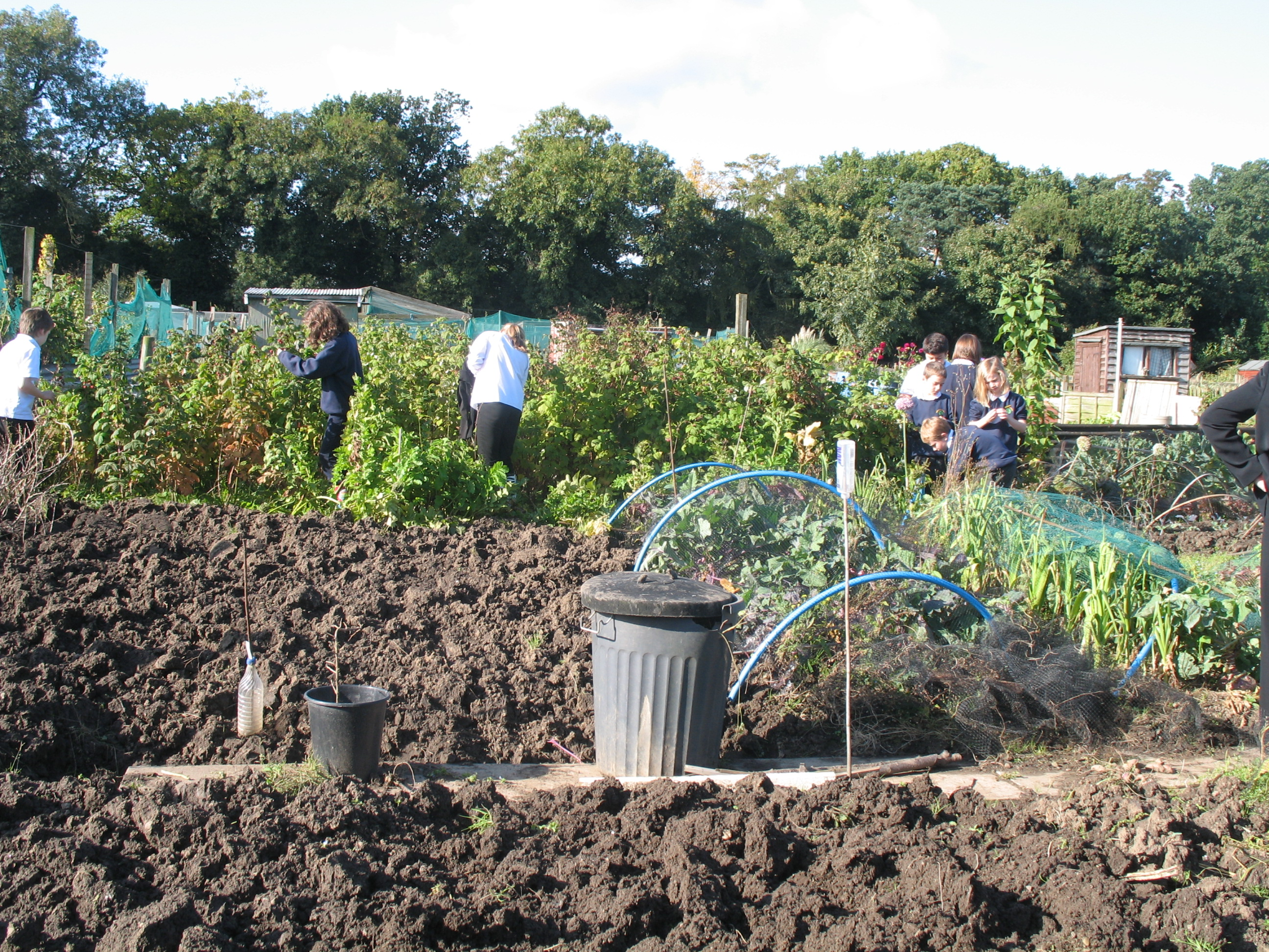 Preston Primary School Children enjoying an afternnoon in their allotment garden