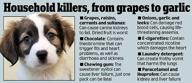 What Home Painkillers Can I Give My Dog