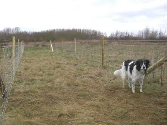 New fencing line completed