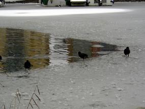 On the ice edge
