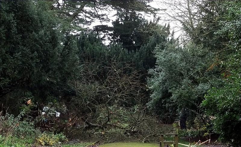 Fallen trees block the Long Walk