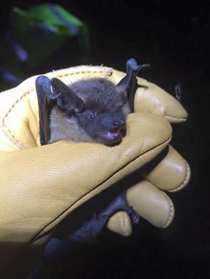 Staffordshire Bat Group