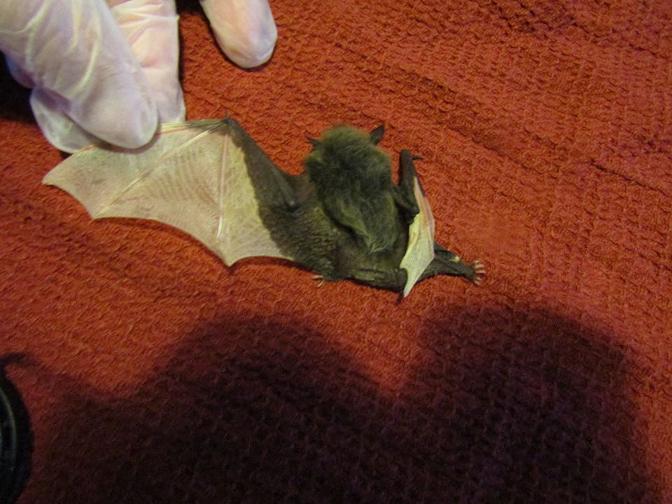 Staffordshire Bat Group