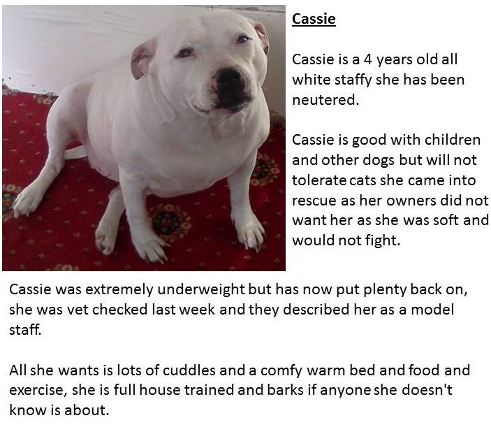 Dogs To Free Home Leeds