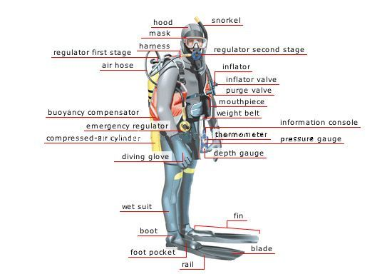 arborfield amphibians sac - name and locate diving equipment diving equipment diagram labeled enzyme diagram labeled