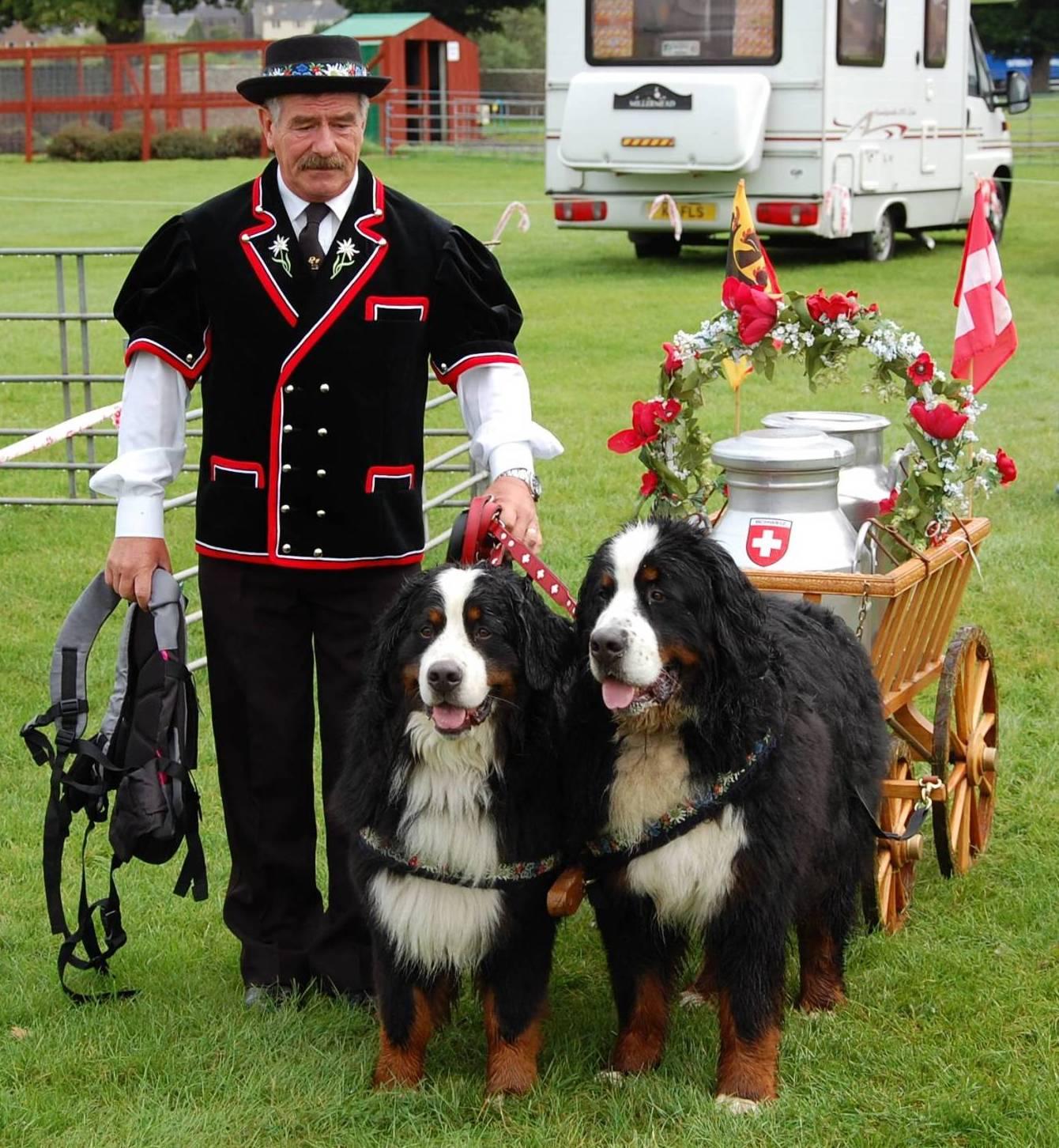 Bernese Mountain Dog Club Of Scotland Kelso 2010 Carting 2