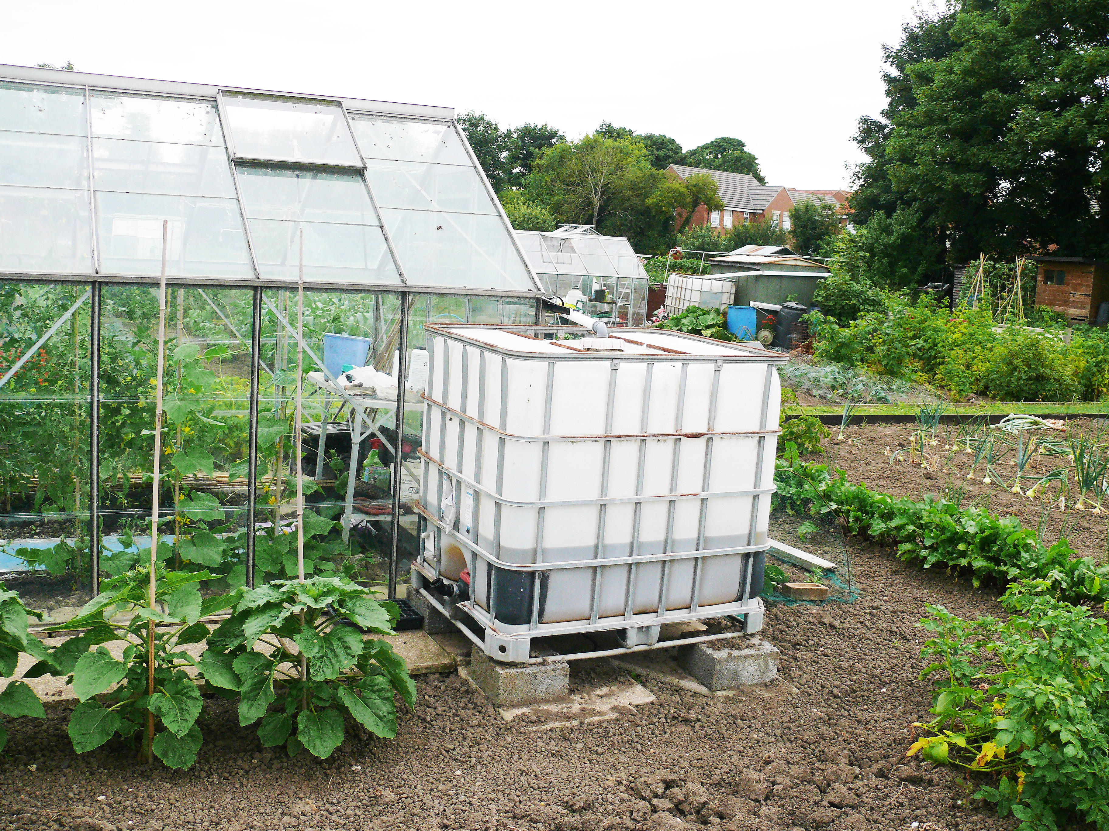 National Vegetable Society East Yorkshire District - Allotments