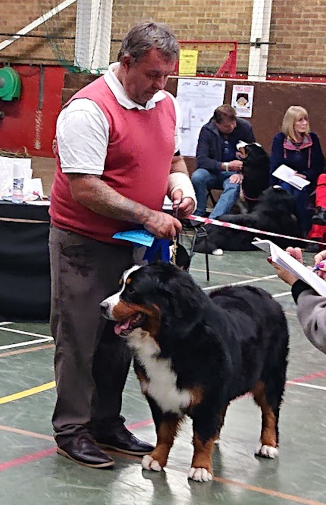 Southern Bernese Mountain Dog Club - 2018 October Open Show